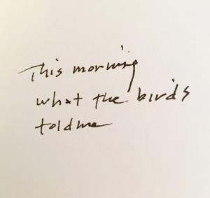 BirdsToldMeMCAaustraliaBook