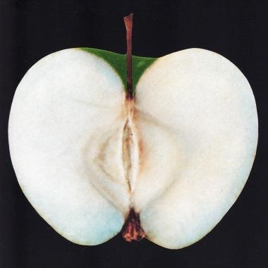 AppleBlankBack